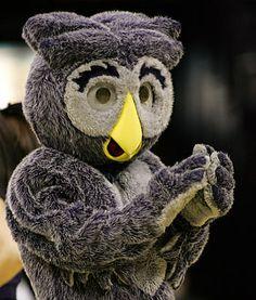 Sammy the Owl — Rice University Rice University, I School, Texans, Auburn, Owls, College, Life, University, Owl