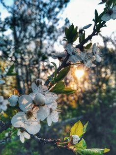 Apricot Blossom, Fruit, Nature, Plants, Naturaleza, Plant, Nature Illustration, Off Grid, Planets