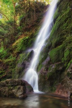 Merriman Falls, Olympic National Park, Washington.