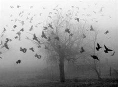 dark black haunting | Tree Black And White Creepy Horror Morbid Macabre Fog Dark - black ...