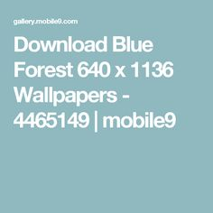 Download Blue Forest 640 x 1136 Wallpapers - 4465149   mobile9