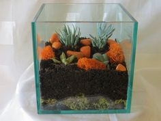 Terrarium Containers Home Depot With Simple Cube Glass Containers Ideas - Large Glass Containers For Terrariums, Large Terrarium Glass Containers. Large Terrarium, Terrarium Containers, How To Make Terrariums, Glass Terrarium, Succulent Terrarium, Interior Design And Remodeling, Home Interior Design, Large Glass Containers, Orange Stone