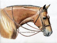 step tutorial by artist Janet Griffin-Scott, you will learn how to draw a realist horse portrait in colored pencil