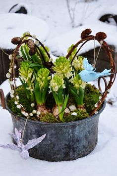 hyachints and tulips Christmas Greenery, Christmas And New Year, Container Gardening, Floral Arrangements, Floral Design, Spring Decorations, Hello Spring, Diy, Gardens