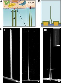 Recently, scientists at Harvard University and Peking University designed, fabricated and demonstrated bioelectronic probes as small as 5 nanometers using a unique three-dimension nanowire-nanotube heterostructure.