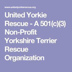 United Yorkie Rescue - A Non-Profit Yorkshire Terrier Rescue Organization Pekingese, Havanese, Yorkie, Yorkshire Terrier Rescue, Boston Terrier, Rottweiler, Shih Tzu, Dachshund, Dog Cat