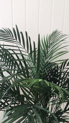 on insta aesthetic Aesthetic Iphone Wallpaper, Aesthetic Wallpapers, Phone Backgrounds, Wallpaper Backgrounds, Plant Wallpaper, Nature Wallpaper, Plant Aesthetic, Boxing Day, Tumblr Wallpaper