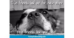 True friends look out for each other Best friends lick your face!