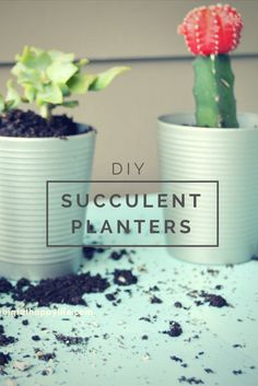 DIY Succulent Planters, perfect for inside your house on the kitchen windowsill