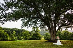 Springtree farms in Knoxville