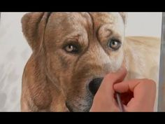 Drawing a dog portrait - time-lapse art  #dogart #dogs #timelapse #animalart #drawing #painting #petportrait