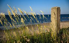 Sea Sky Grass Ear botany Beach Nature