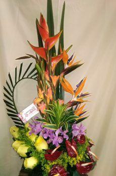 Productos – Floristeria la Maria Flower Arrangements, Plants, Tropical Flowers, Flower Vases, Water Colors, Bouquets, Products, Floral Arrangements, Plant