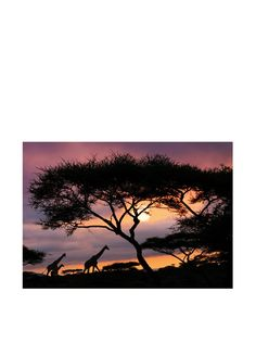 1000 images about international party ideas on pinterest for African sunset wall mural