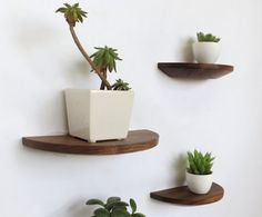 These half round walnut shelves are a subtle and versatile way to decorate your home.