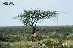Etosha, Namibia Pictures