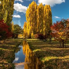 Autumn is currently in full swing in Australia, and the picturesque Derwent Valley in is a beautiful place to soak up the vibrant colours of this Perth, Brisbane, Melbourne, Autumn In Australia, Australia Travel, Autumn Scenery, Autumn Trees, Derwent Valley, Australia Pictures