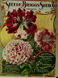 1901 - Steele Briggs - Catalogue of Canada's greatest seed house, back cover