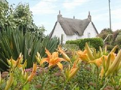Thatched house with large garden by a Cornish beach Vacation Rental in Sennen from @homeaway! #vacation #rental   #travel #homeaway  http://www.homeaway.com/vacation-rental/p413733