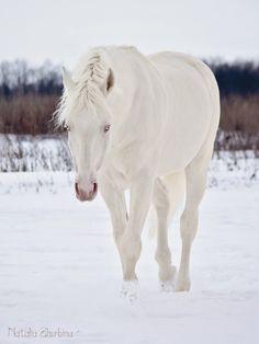 еще немного неземного коня)  Photography (c) Rightful owner.