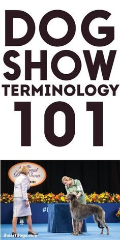 Ever wonder exactly what they're talking about in a dog show? Dog Show Terminology 101 will answer everything you need to know.