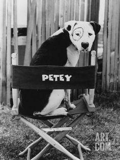 Uplifting So You Want A American Pit Bull Terrier Ideas. Fabulous So You Want A American Pit Bull Terrier Ideas. Love My Dog, Pitbull Terrier, Bull Terriers, Perros Pit Bull, Mon Combat, Pitbull Facts, Pitbulls, Pit Bull Love, Dog Cat