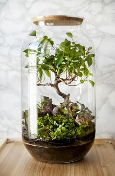 All Flowers Images, Flower Art Images, Terrarium Jar, Garden Terrarium, Bottle Garden, Photo Tree, Hedges, Flower Decorations, Organic Gardening