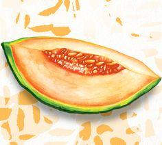 Food Illustration. Cantaloupe melon by Amanda Dilworth. www.amandadilworth.co.uk