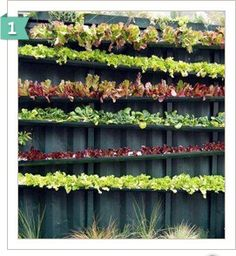 Gutters attached to the fence for lettuce and strawberries.perfect for small yard
