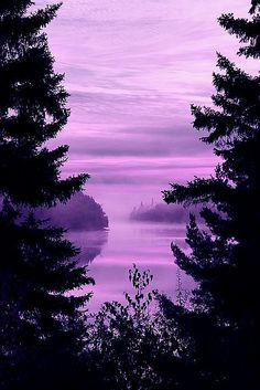 Beautiful shades of purple...