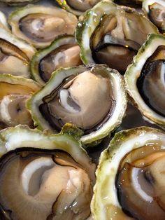 Chilean Oyster. Ostra borde negro