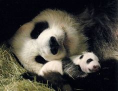 I want to go somewhere with pandas.....  shh