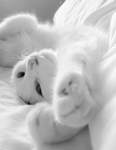 I love cats of all types. pure white cats are hard to find My sister had one once she named her Heaven. I had a black one named in Midnight.