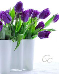 Matte white aalto vase #iittala Vase, Tulips, Plants, Home Decor, Decoration Home, Room Decor, Plant, Vases, Home Interior Design