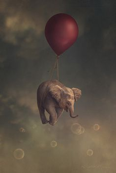 hitchhiker - Pinned by Mak Khalaf Fine Art balloonbluebubblescloudscompositedigital manipulationelephantelephant babyelephant calffantasyflyflyingredred balloonskysurrealyellow by kristenkml Elephants Photos, Elephant Pictures, Elephant Facts, Elephant Love, Animals And Pets, Baby Animals, Cute Animals, Elefant Wallpaper, Surreal Art