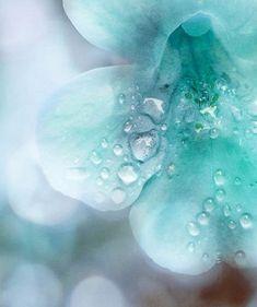 Aqua Flower Kissed By The Rain