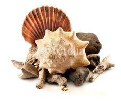 Marine composition. #marine #seashell