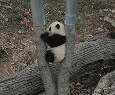 "I think I'll ""Stick"" here by somesai, via Flickr"
