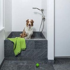 Laundry Room with Dog Bath Shower