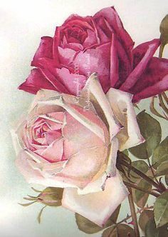 *FREE SHIPPING* This sweet cabbage rose pairing is the work of the Victorian artist, Paul de Longpre. This laser print on heavy stock