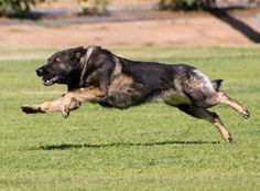 the dogfathers: Rhymes With Schutzhund