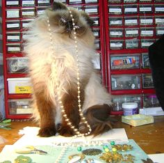 Novegatti Designs: Build a Line Design Challenge, Part One ... Pamela Anger of Novegatti Designs    This is Toby who graces the pages of the B'sue Boutiques Creative Group at Facebook as our mascot almost every Wednesday, for Work Table Wednesday!