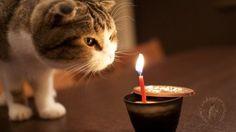 猫のきれいな画像を貼るよー:ハムスター速報