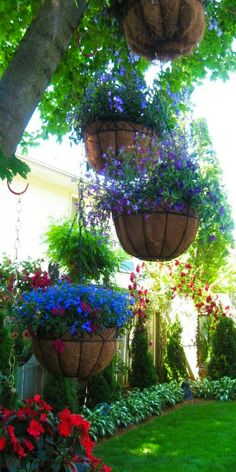 ♥••hanging plants from tree branches••♥