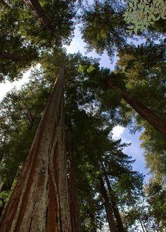 La importancia del árbol - Tendenzias.com