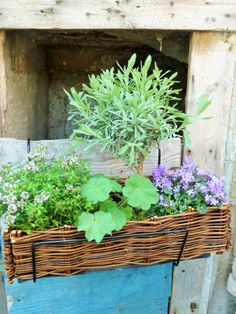 Window box inspiration Window Sill, Small Gardens, Garden Pots, Herbs, Plants, Inspiration, Search, Box, Courtyards
