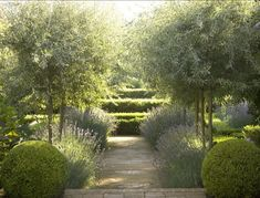 Olive trees underplanted with lavender (by Sydney, AU designer Peter Fudge via Gardenista) Sydney-based garden designer Peter Fudge has never been fazed by the fact that Australia is the driest continent in the world. For nearly 25 years, he has Dry Garden, Garden Trees, Meadow Garden, Smart Garden, Garden Path, Garden Planters, Vegetable Garden, Formal Gardens, Outdoor Gardens