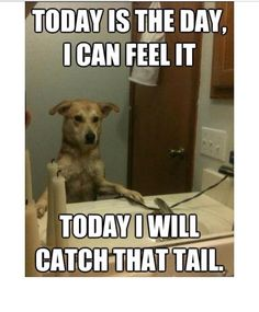 A dogs daily routine