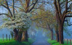 Scarica sfondi nebbia di mattina, primavera, strada