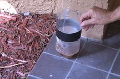 Using a few household ingredients, you can make a cheap and easy DIY mosquito trap and keep bug bites at bay in no time. Mosquito Control, Pest Control, Mosquito Trap, Keeping Mosquitos Away, Backyard Paradise, Tree Care, Outdoor Projects, Outdoor Ideas, Backyard Ideas